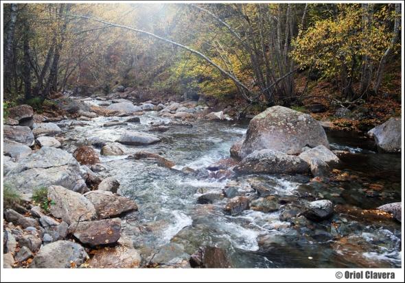Baixant vaig passar per l'itinerari de la Rebuira, un corriol que voreja el riu Noguera de Vallferrera